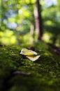 wood, nature, garden