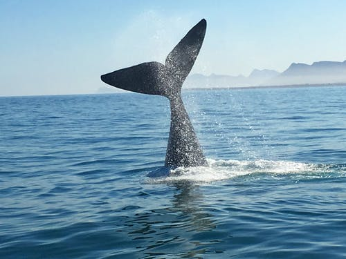 Free stock photo of whale