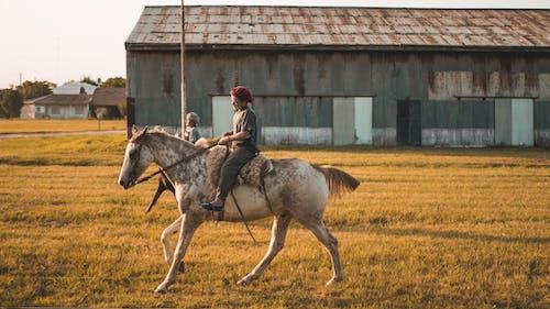 Kostnadsfri bild av argentina, basker, bondgård, boskap