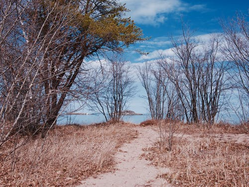 Free stock photo of dirt, michigan, nature, path
