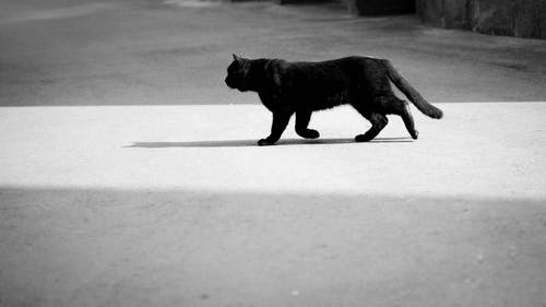 Black Cat Walking on Snow Covered Ground