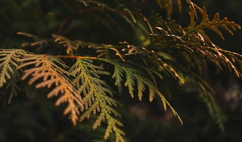 Immagine gratuita di bellezza della natura, messa a fuoco ravvicinata