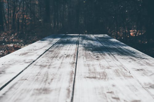 Free stock photo of nature, rustic, woods