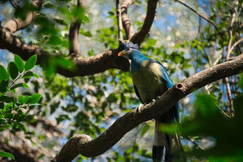 Blue and Green Bird on Brown Tree Branch