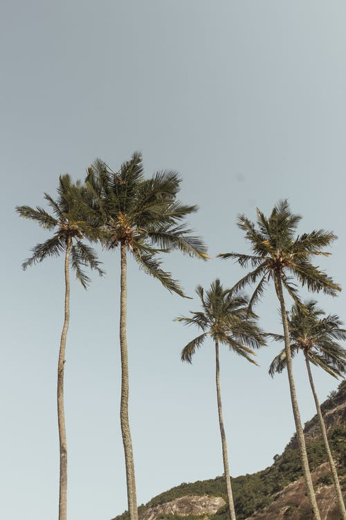 Green Palm Trees Under Blue Sky
