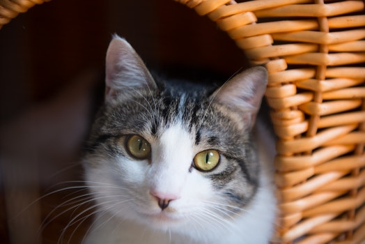 Free stock photo of cats, cat