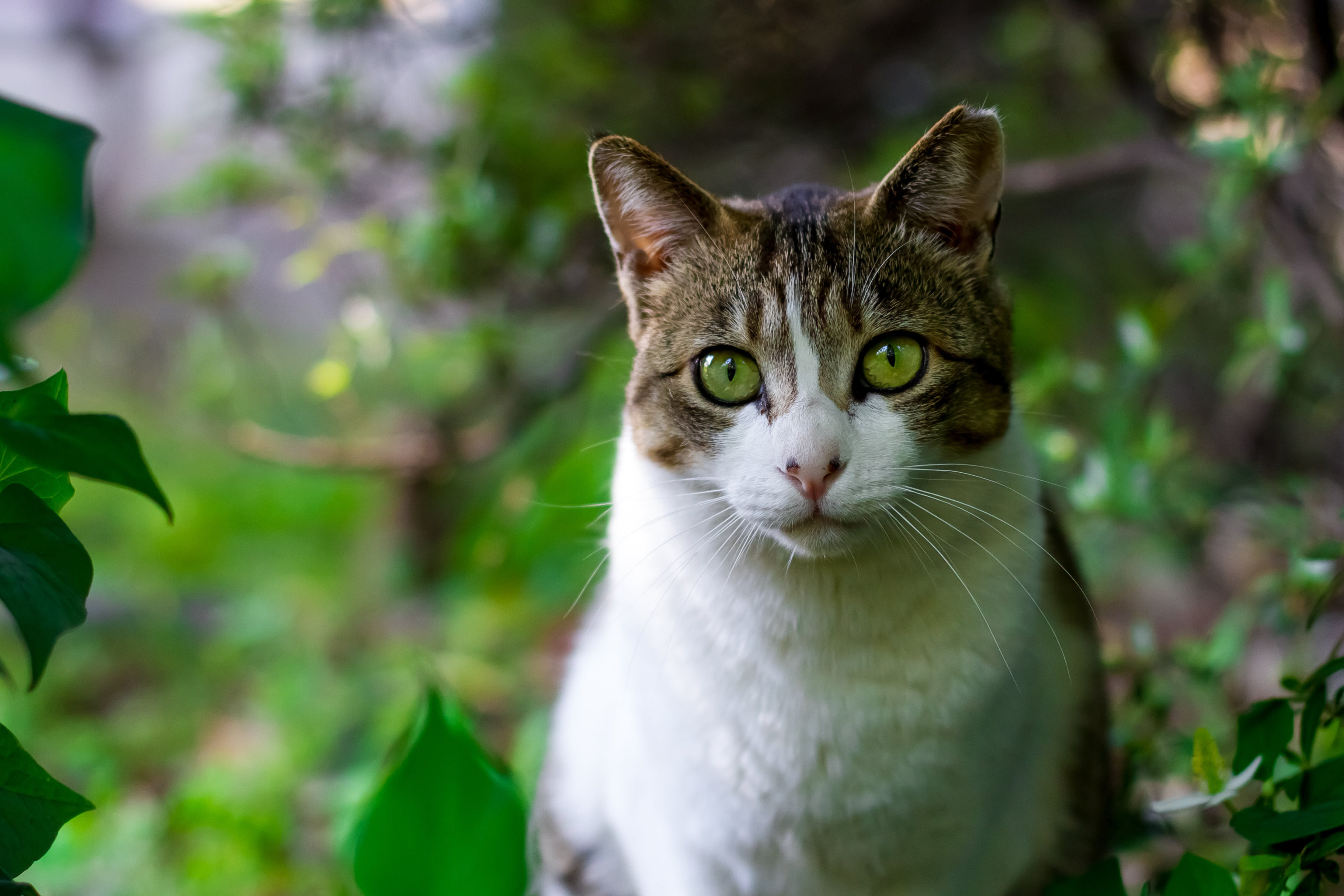 White and Brown Cat Between Plants