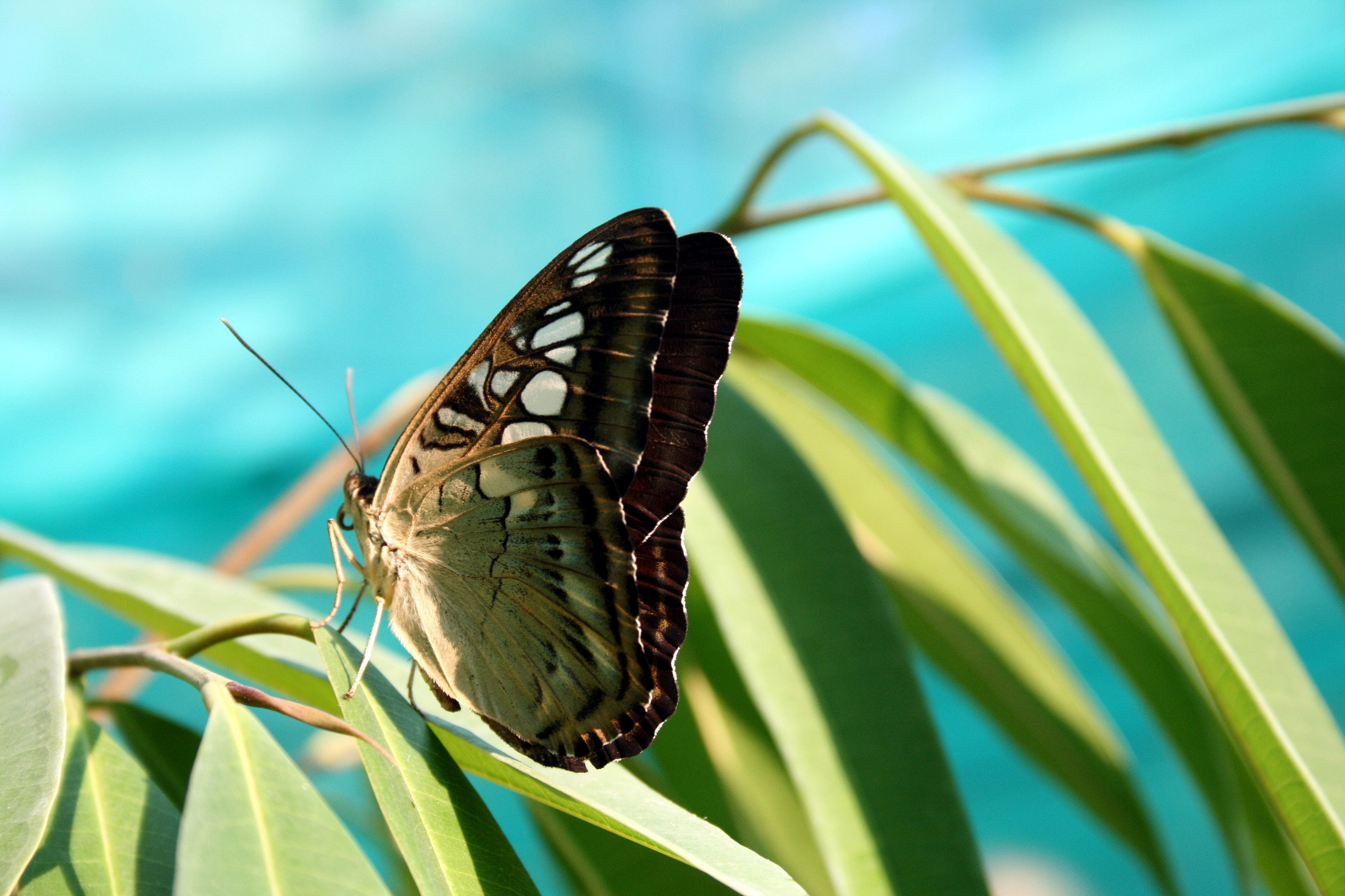 Green Brown Butterfly