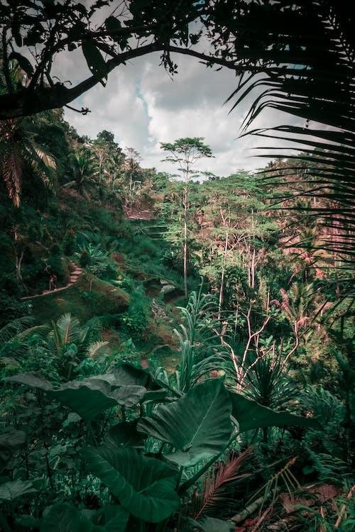 Free stock photo of bali, bamboo trees, indonesia, jungle
