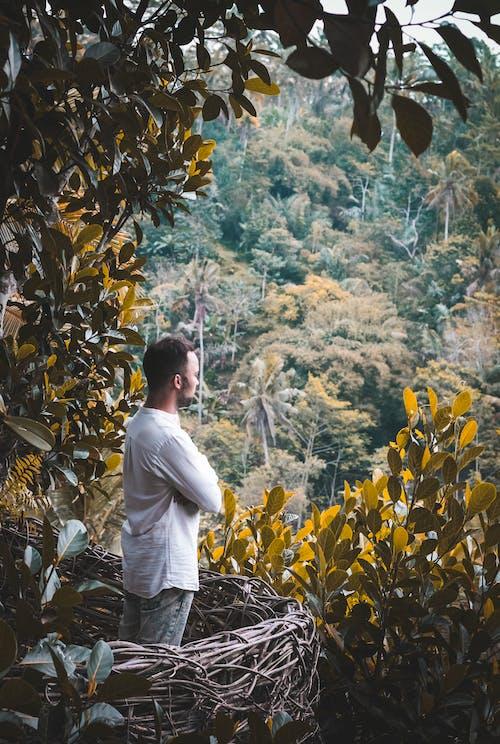 Free stock photo of asia, bali, balinese, bamboo trees