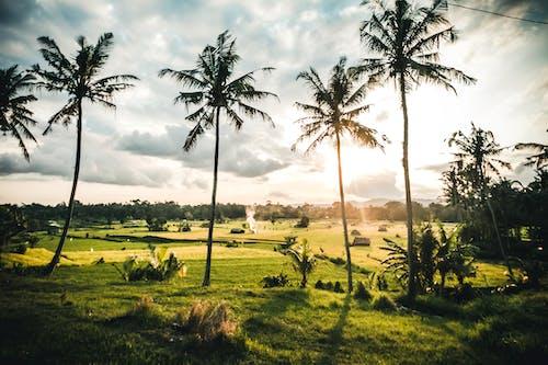 Free stock photo of bali, balinese, indonesia, jungle