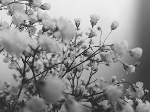 Gratis lagerfoto af blomster, blomstermotiv, botanik, Botanisk