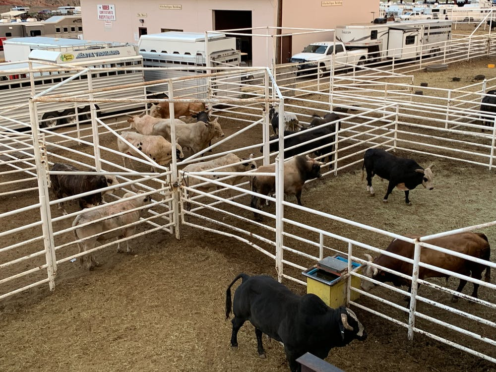 Foto profissional grátis de agricultura, animais, animal da fazenda