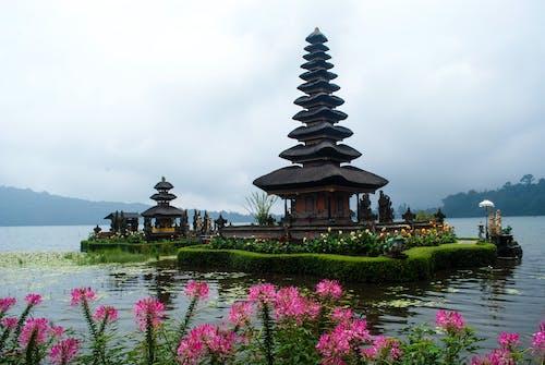 Free stock photo of bali, beratan temple, flower, indonesia