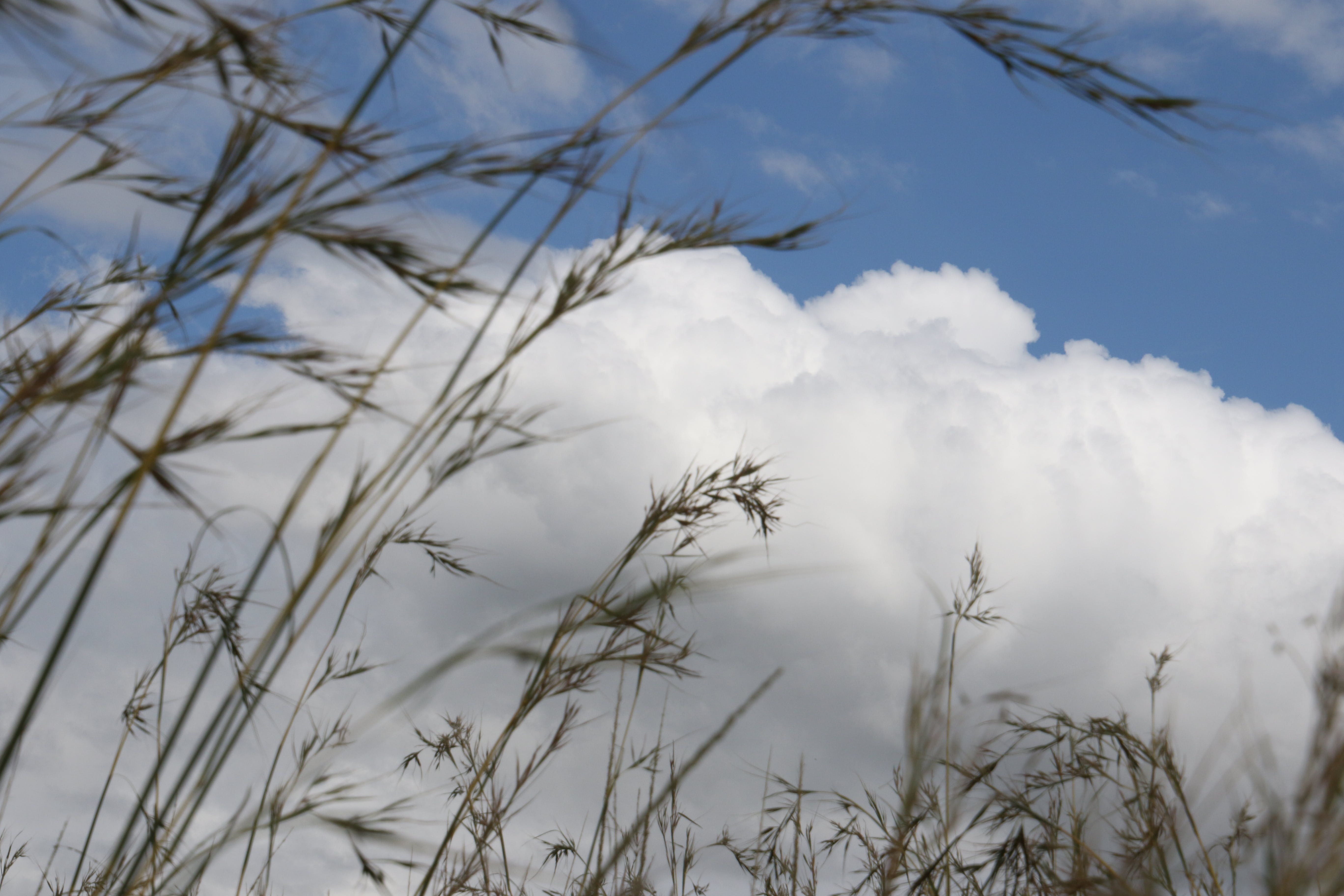 Free stock photo of clouds, blue, grass, white