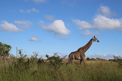側面圖, 動物, 動物攝影, 哺乳動物 的 免费素材照片