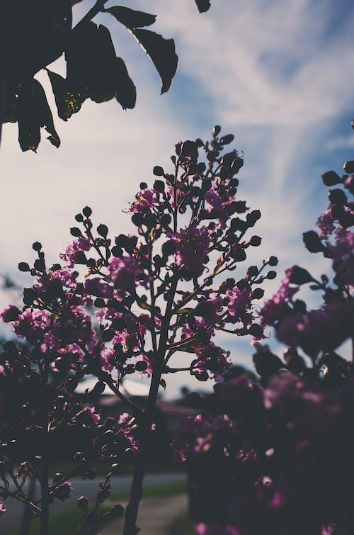 ağaç, bahar, çiçek, gökyüzü içeren Ücretsiz stok fotoğraf
