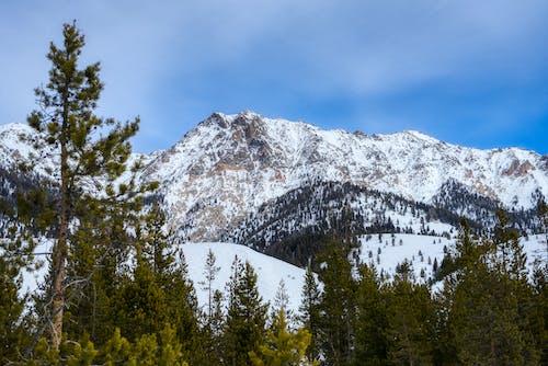 Fotobanka sbezplatnými fotkami na tému borovice, chladný, hora, ihličnan