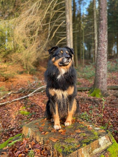 Black and Tan Short Coat Medium Dog Sitting on Ground