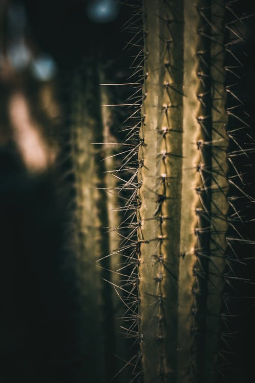 Saguaro Green Plant  With Sharp Spikes