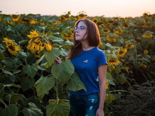 Photos gratuites de agriculture, aube, beau, beauté