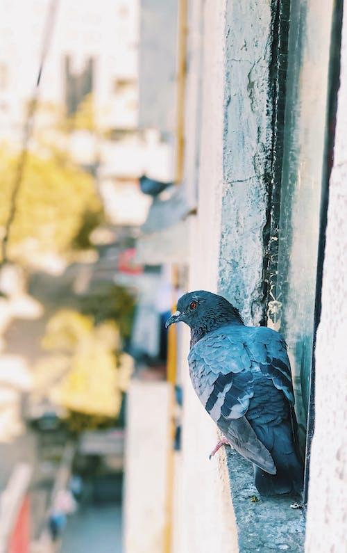 Free stock photo of birds eye view, blur background, Focus blur, iphone 7
