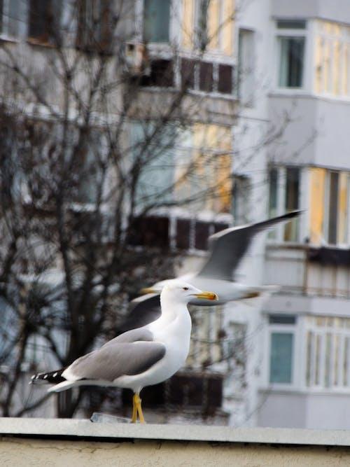 Free stock photo of animal photography, beautiful, bird, birds