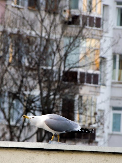 Free stock photo of beautiful, Beautiful animal, bird, gull