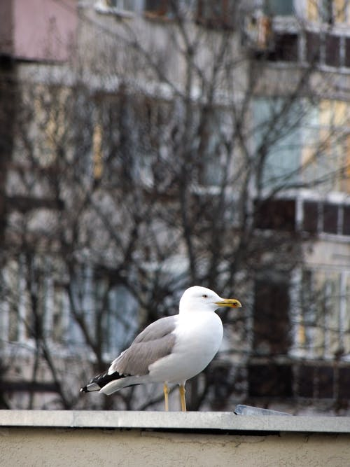 Free stock photo of gull, photo, photography, seagull