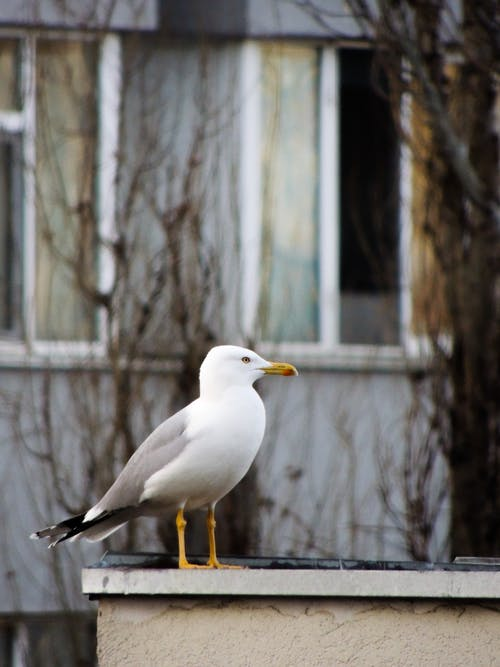 Free stock photo of animal photography, art photo, bird, photography