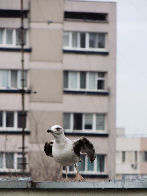 Free stock photo of animal photography, bird, gull, photo