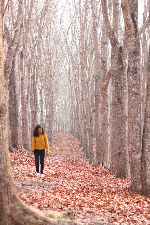 Walking Woman Wearing Black Pants on Pathway of Trees