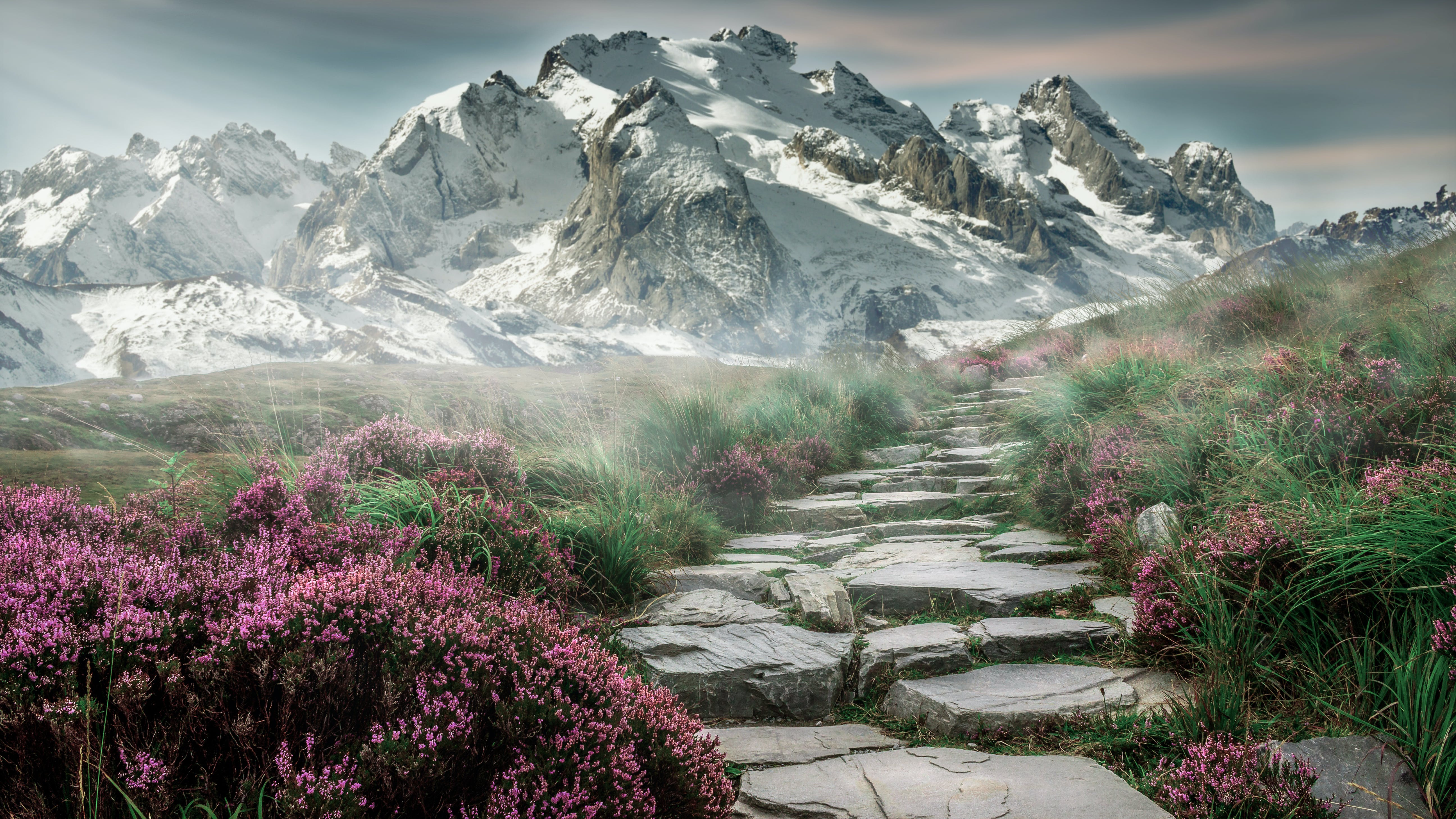 Rock in Between Grass and Flower
