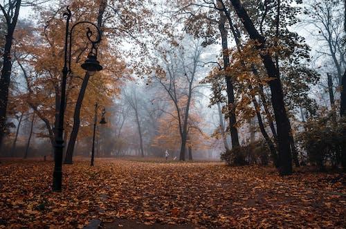 Бесплатное стоковое фото с ветви, ветвь, деревья, лес