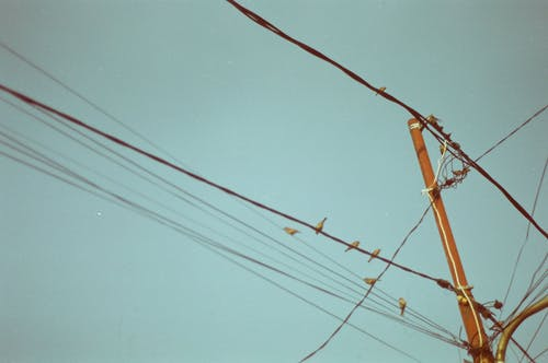 Electric Post and Flock of Brown Birds Preached on Power Line