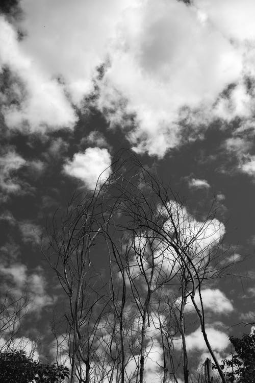 Free stock photo of black and white, cloud, dead nature, dead tree