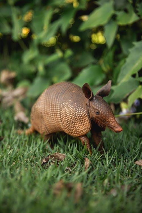 緑の草の上の茶色の動物