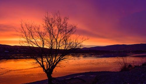 Kostnadsfri bild av morgon, soluppgång