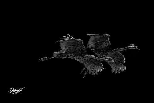 Foto profissional grátis de P&B, passarinhos, preto e branco