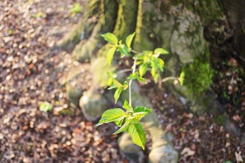 Fotos de stock gratuitas de bosque, Canon, fotógrafo, naturaleza