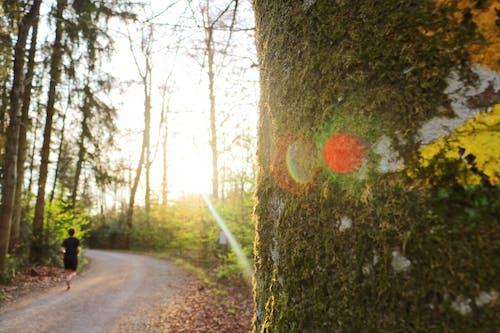 Fotos de stock gratuitas de árbol, fotografía de naturaleza, naturaleza, sol