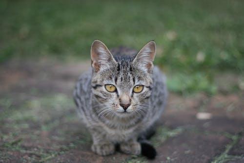 Безкоштовне стокове фото на тему «бруківка, жовтий, зелений, кішка»