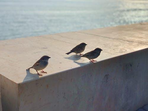 Foto stok gratis burung kota, latar belakang musim dingin, Lisbon, matahari keemasan