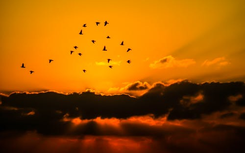 Безкоштовне стокове фото на тему «зграя птахів, небо, похмура погода, Природа»