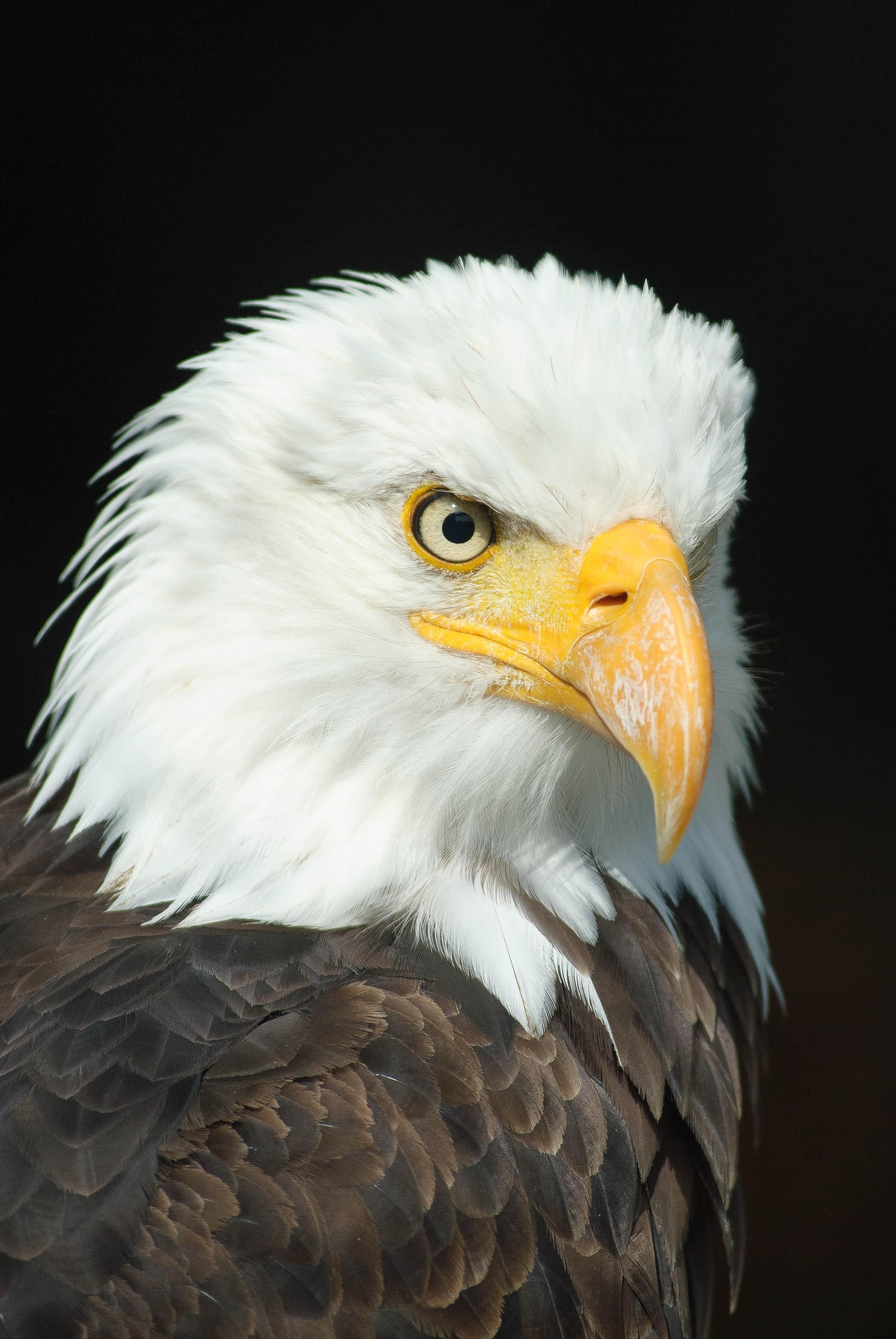 Similar photos american eagle