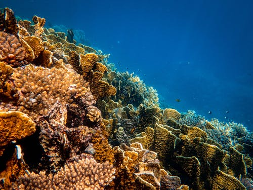 Photo Of Corals Underwater