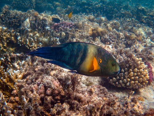 Photo Of Fish Near Corals