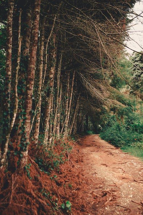 Foto profissional grátis de alameda, ao ar livre, árvore, arvoredo