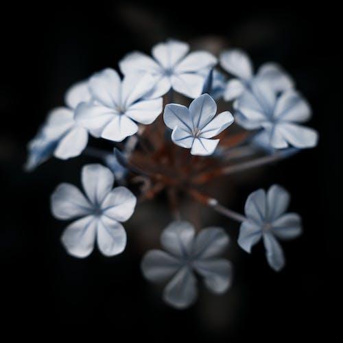 Immagine gratuita di ambiente, australia, bel fiore, bellissimo