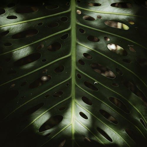 Бесплатное стоковое фото с боке, ботанический, ботанический сад, вены